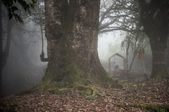 Forest in Kochi Stock Photography