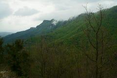 Forest of la Grevolosa Stock Image