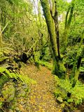 Forest on La Palma, Canary Islands Royalty Free Stock Image
