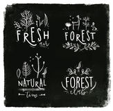 Forest labels chalk Stock Photos