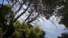 Forest in Laganas, Zakynthos Royalty Free Stock Photo