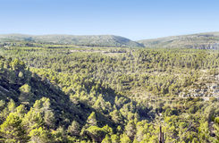 Forest of Lagrasse Stock Images