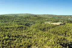 Forest of Lagrasse Royalty Free Stock Images