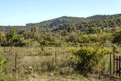 Forest of Lagrasse Royalty Free Stock Image