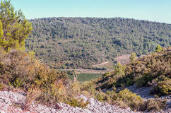 Forest of Lagrasse. On a sunny day with the mountains in the background.You can see some vineyards Stock Photos