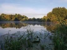 Forest Lake Immagine Stock Libera da Diritti