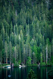 Forest With Lake. Forest near June Lake, CA Royalty Free Stock Photo