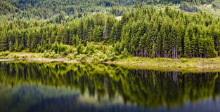 Forest and lake Stock Images