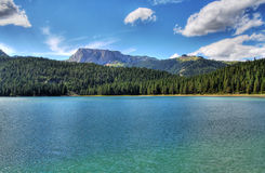 Forest and lake Stock Photography