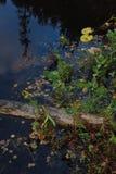 Forest Lake Stock Fotografie