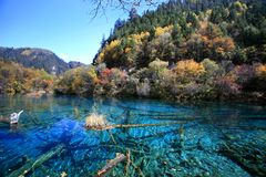 Forest and lake. In colours of autumn in Jiuzhaigou Royalty Free Stock Photos