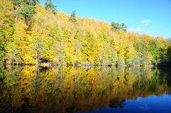 Forest and lake. Forest's reflection on blue lake Stock Photography