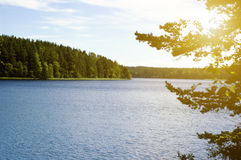 Forest and lake Royalty Free Stock Photo