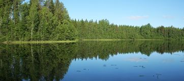 Forest and lake. Green forest and the lake Royalty Free Stock Photography