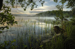 Forest Lake. Fog over the water. Early morning Royalty Free Stock Images