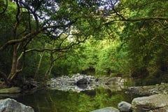 Forest Lake. Lake in Shing Mun Reservoir, Hong Kong Royalty Free Stock Photo
