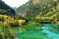 Forest and lake Royalty Free Stock Images