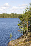 Forest lake. Lake in the pine forest in summer, Russia Royalty Free Stock Photography