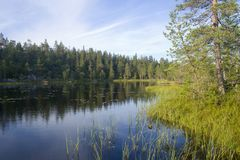 Forest lake. Early morning at forest lake, Karelia, northen Russia Royalty Free Stock Images