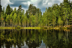 Forest Lake lizenzfreies stockbild