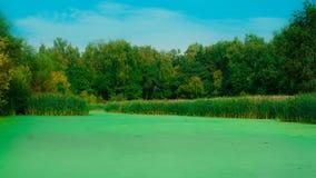 Forest Lake Fotografia de Stock