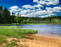 Forest lake. In the summer Royalty Free Stock Photos