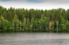 Forest Lake Stock Fotografie