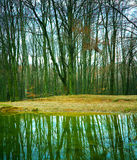 Forest lake. Lake in leafless forest in winter Royalty Free Stock Image