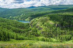 Forest Lake Foto de archivo libre de regalías