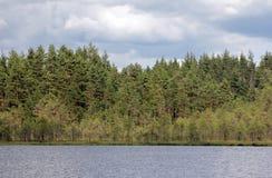 Forest Lake Arkivbilder