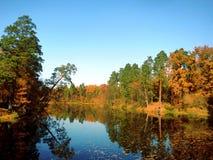 Forest Lake imagen de archivo libre de regalías