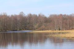 Forest Lake Fotografía de archivo