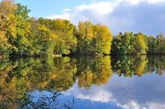Forest Lake stockfotos
