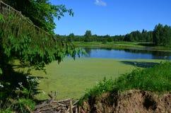 Forest Lake Immagini Stock Libere da Diritti