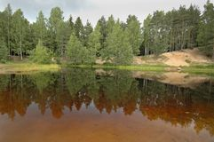 Forest lake. Transparent lake in a forest Stock Photography