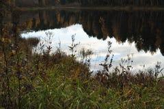 Forest Lake Imagen de archivo