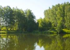 Forest Lake Royaltyfria Foton