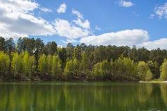 Forest Lake royaltyfria bilder