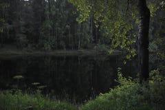 Forest Lake Fotos de archivo libres de regalías