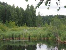 Forest Lake Fotos de archivo