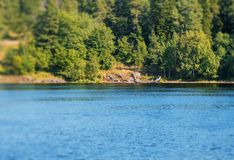 Forest lake with an abandoned old boat on a sunny day, tilt shift effect. View of the shore of the lake with a small tilt shift effect stock images