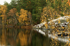 Forest lake in autumn. Stock Photos