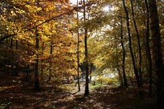 Forest lake in the autumn 2016. A calm forest lake in autumn 2016 royalty free stock photo