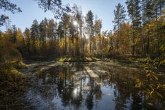 Forest lake, magnificent autumn landscape, morning fog, blue sky stock photos