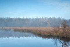 Forest lake in autumn misty morning Stock Image