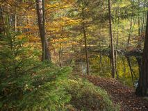 Forest lake in autumn with oak and beech tree and spruce tree in Stock Photos