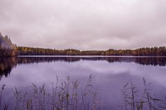 Forest lake in the autumn Royalty Free Stock Photos