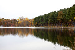 Forest lake. Autumn forest lake and a reflection stock photo