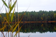 Forest Lake. A beautiful calm lake in the autumn forest royalty free stock photo