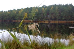 Forest Lake. A beautiful calm lake in the autumn forest stock photography